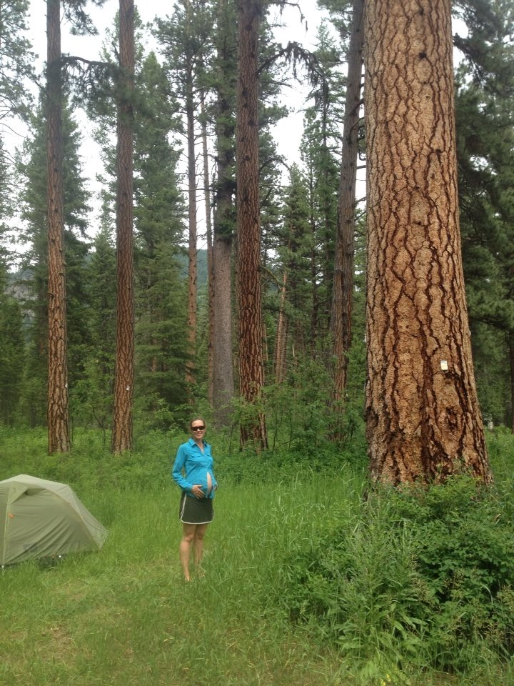 camping pregnant big belly and big pine tree