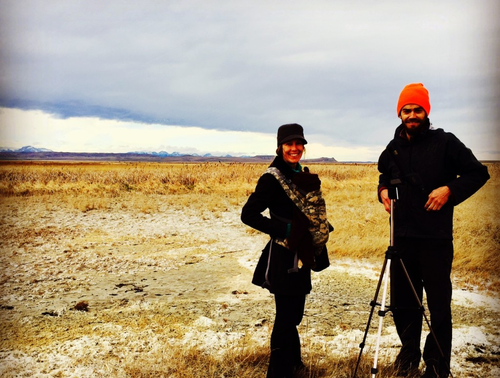 Birding in Choteau with hurricane-force gusts